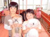 子供と秋田犬の赤ちゃん