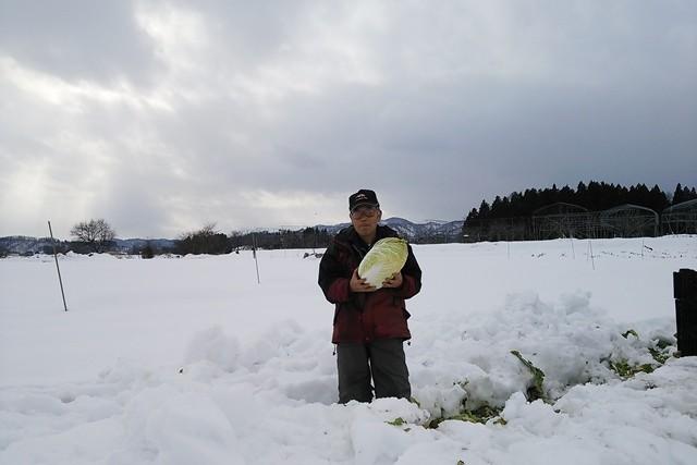 雪下野菜山形高橋農園