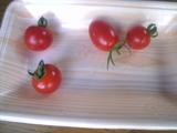 基地のトマト-2