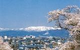 烏帽子山桜2