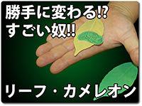 leaf-chameleon