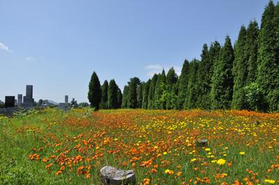 滝の川墓地と花1