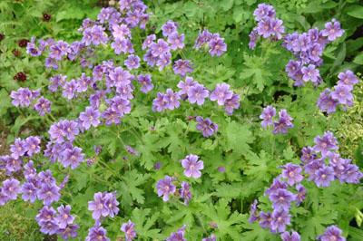 上野ファーム花