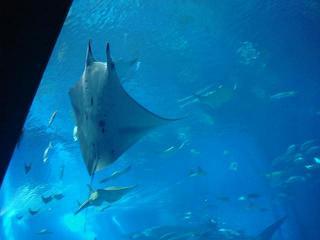 美ら海水族館8