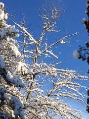 Snow branches backyard
