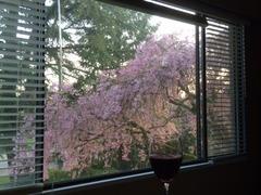 Sakura with wine