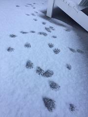 Sundeck footprints2