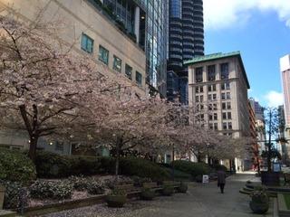 Sakura Downtown