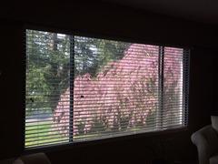 Sakura_Window