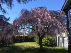 Sakura Blue Sky House