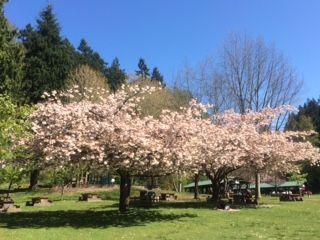 Belcarra Spring4