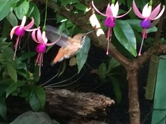 Humming Bird_B Garden