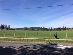 Green field Stelly