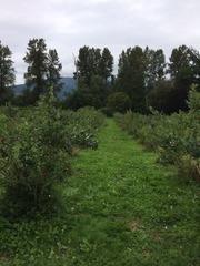 BB Farm