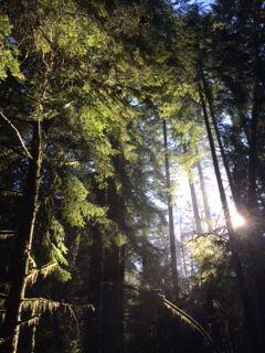 mundy park wood