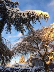 snow frontyard