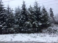 バンクーバー初雪