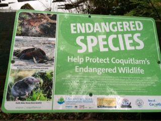 mundy lake endangered