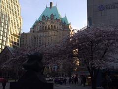 Vancouver Hotelと桜
