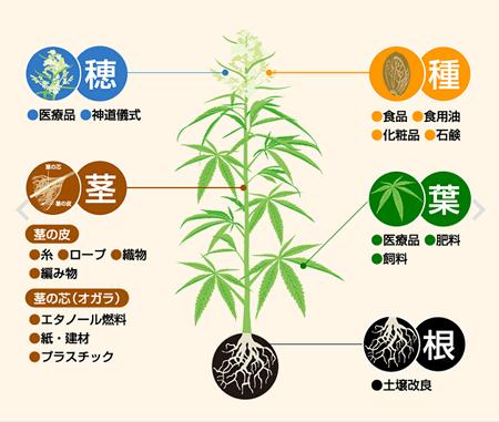大麻 万能型天然資源