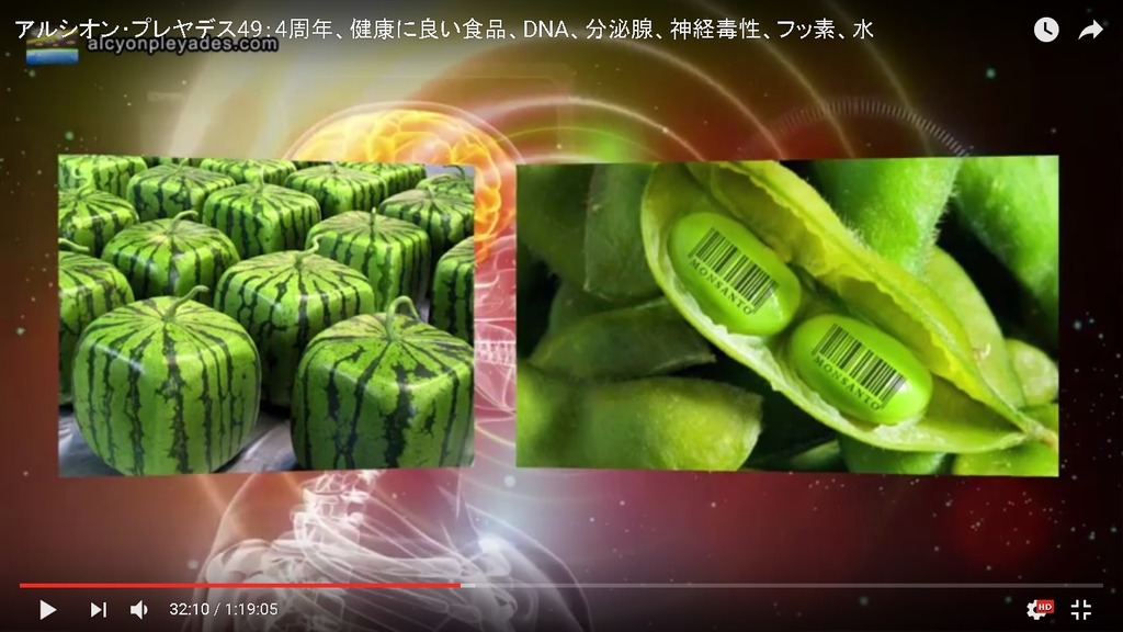 GMOすいか大豆AP49