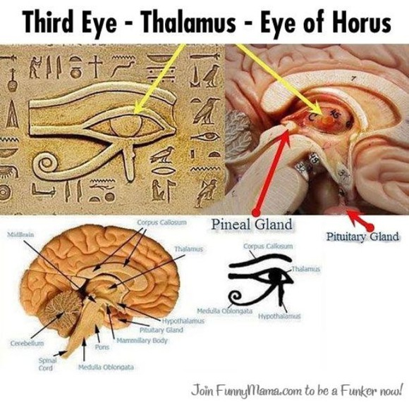 松果体 ホルスの目