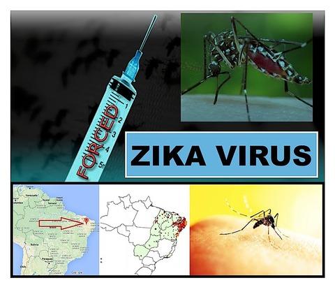Zika BRAZIL