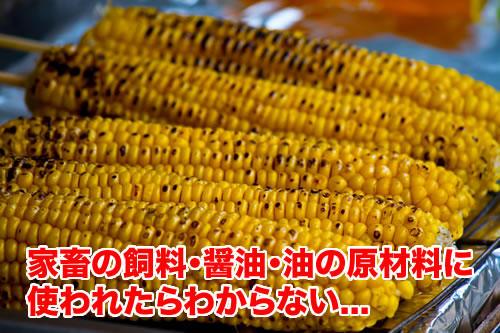 GMOコーン餌 油