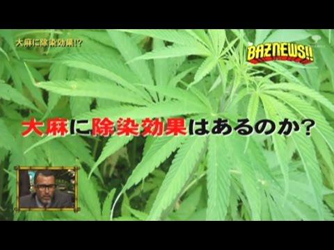 大麻に除染