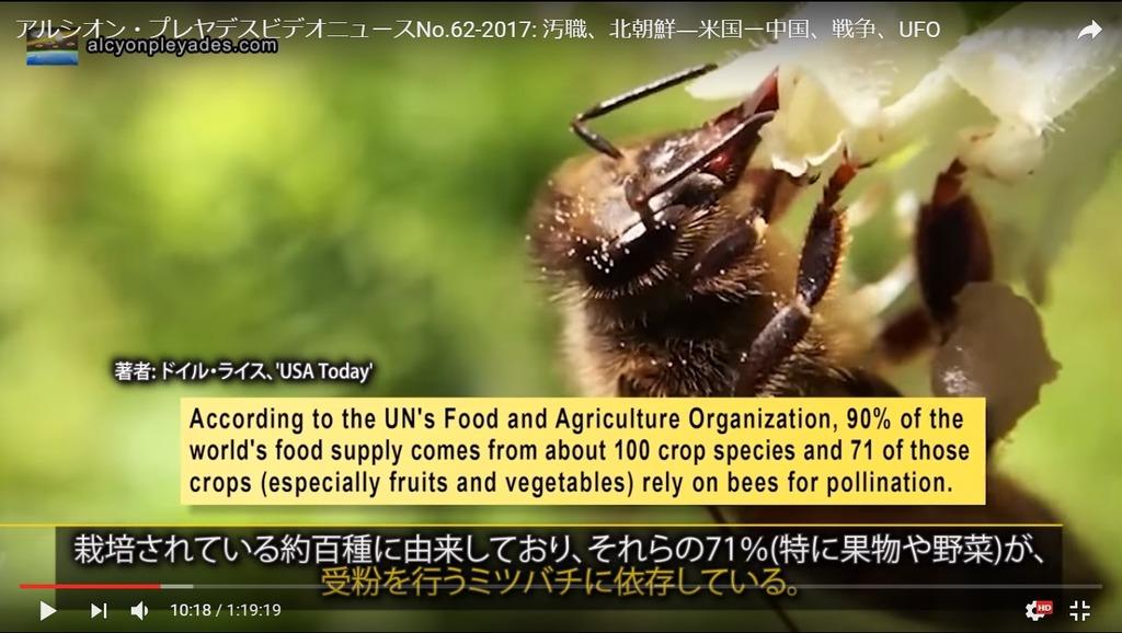 蜜蜂依存APN62