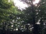 北軽井沢キャンプの朝