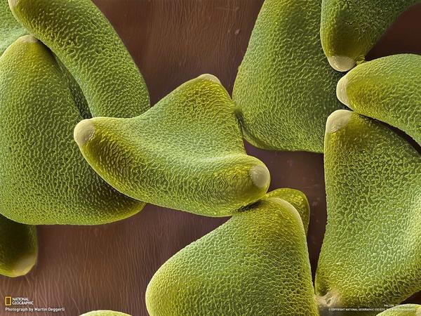 pollen9