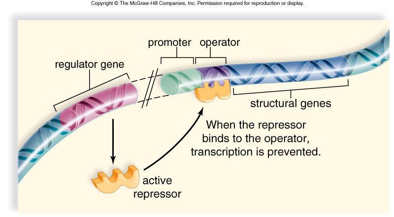 原核生物の遺伝子発現調節-オペロン説- | バイオハックch
