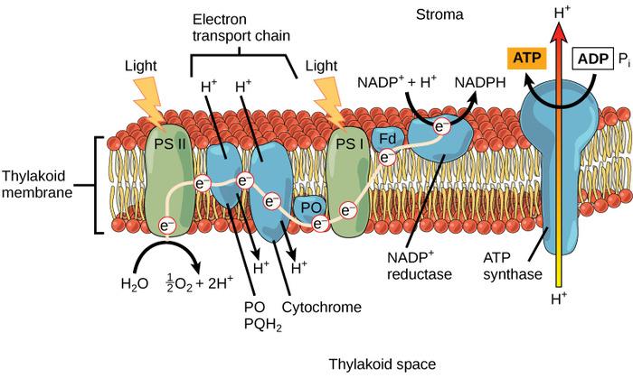 光化学反応