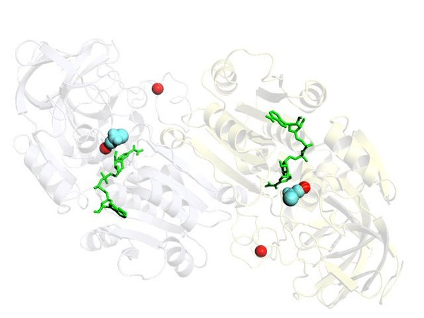 脱水素酵素