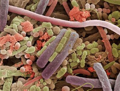 舌表面の細菌