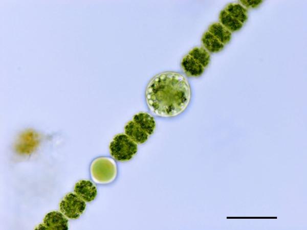 prokaryote3