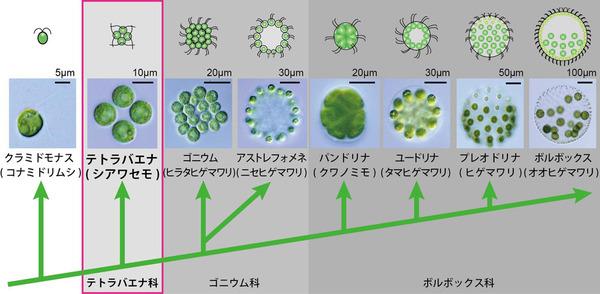 多細胞生物