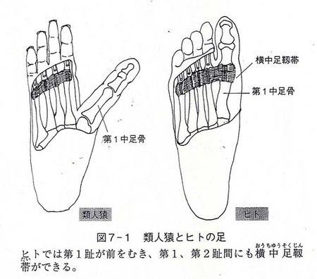 拇指対向性