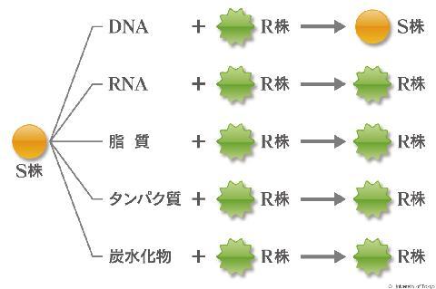 遺伝子研究の歴史