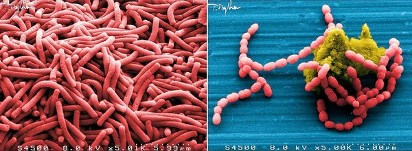 prokaryote4