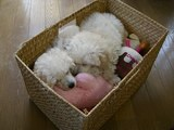 おもちゃ箱でねんね