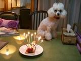 誕生日8才