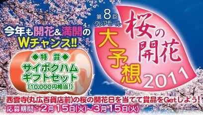 第8回桜の開花予想
