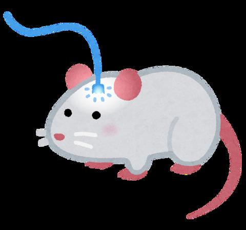 sicence_mouse_optical_fiber