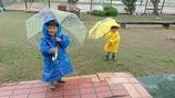 DSC_0070_xlarge雨