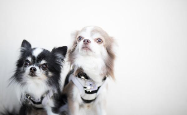 ペット保険の加入増加 支払いめぐりトラブルも