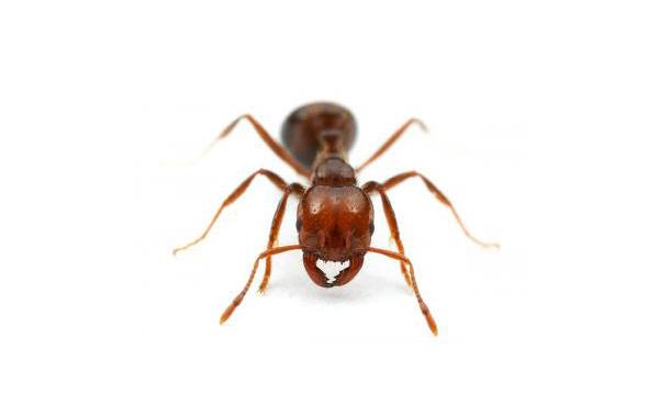 【ヒアリ特需】「ヒアリに効果アリ」売れる殺虫剤 環境省は「自治体に連絡を」