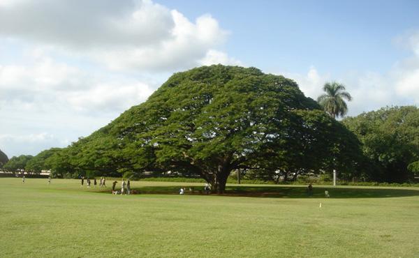 「この木なんの木」の維持費wwwwwww