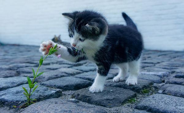 明日の給料日で猫ちゃん貯金30万円がついに溜まるから猫飼う!!